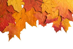 Dry autumn leaves isolated Stock Photo
