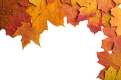 Dry autumn leaves isolated Stock Image