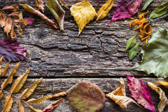 Dry autumn leaves mockup Royalty Free Stock Images