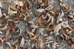 Dry Autumn Leaves On The Ground-background Texture Image Royalty Free Stock Photo