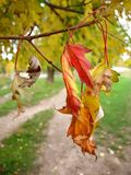 Dry autumn leaves in the park Royalty Free Stock Image