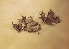 Dry autumn leaves pencil drawing background Royalty Free Stock Photography