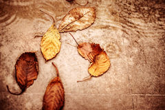 Dry autumn leaves in the puddle. Fallen dry autumn leaves in the puddle, abstract natural background, traditional autumnal sadness and depression, season changes Stock Photos