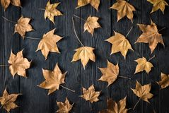 Dry autumn leaves on a dark background royalty free stock images