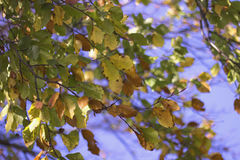 Dry autumn leaves and sky Stock Images