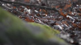 Dry autumn leaves smoothly flow into the base of a tree in a beautiful lush green moss. stock video footage