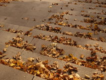 Dry autumn leaves on stairs Royalty Free Stock Photos
