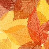 Dry autumn leaves template. EPS 8 Royalty Free Stock Photography