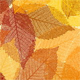Dry autumn leaves template. EPS 8 Royalty Free Stock Photos