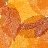 Dry autumn leaves template. EPS 8 Stock Images