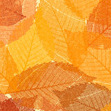 Dry autumn leaves template. EPS 8 Royalty Free Stock Images