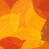 Dry autumn leaves template. EPS 8 Stock Photos