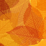 Dry autumn leaves template. EPS 8 Royalty Free Stock Image