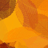 Dry autumn leaves template. EPS 8 Stock Photo