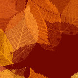 Dry autumn leaves template. EPS 8 Stock Image