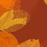 Dry autumn leaves template.  Royalty Free Stock Images