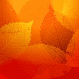 Dry autumn leaves template. EPS 10 Stock Photos