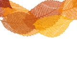 Dry autumn leaves template. EPS 10 Royalty Free Stock Images