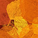 Dry autumn leaves template. EPS 10 Stock Photography