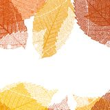 Dry autumn leaves template. EPS 10 Royalty Free Stock Image