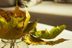 Dry autumn leaves in a vase arrangement Royalty Free Stock Photos