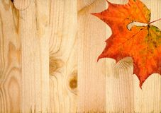 Dry autumn marple leaf fallen at pine wood planks texture background with knots vector illustration