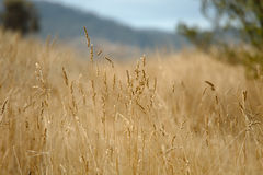 Dry autumn meadow Royalty Free Stock Image