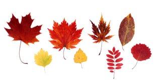 Dry Autumn Sheet Royalty Free Stock Image