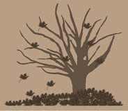 Dry autumn tree Stock Photos