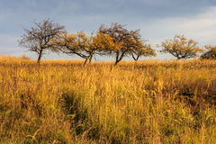 Dry autumn trees and grass under a heavy gray sky Royalty Free Stock Photos