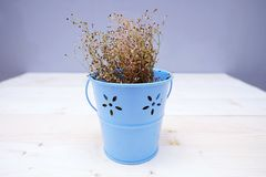 Dry Baby`s Breath Flower in The Blue Pot. On the Table Wood Royalty Free Stock Images