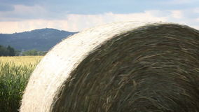 The dry bale of hay rolling through a field stock video footage