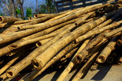 Dry bamboo. Dry bamboo stems for using for any purpose stock image