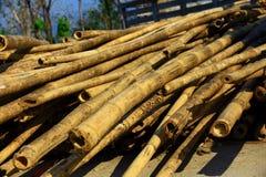 Dry bamboo. Stock Image
