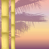 Dry bamboo. On an abstract background. silhouette of a palm tree. vector illustration Royalty Free Stock Photography