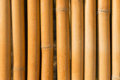 The dry bamboo background Stock Photos