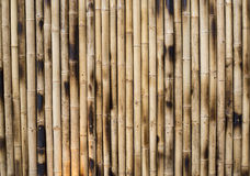 Dry Bamboo Columns Stock Images