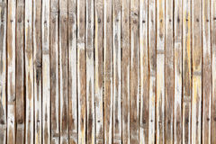 Dry bamboo fence background with nails Stock Image