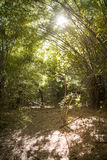 Dry bamboo forrest royalty free stock photos