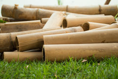 Dry bamboo. On the grass Royalty Free Stock Photos