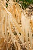 Dry bamboo leaf Stock Image