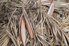 Dry bamboo leaf Stock Photography
