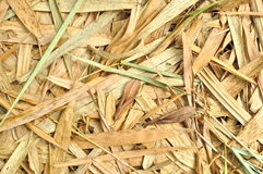 Dry bamboo leaves Royalty Free Stock Image