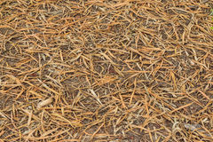Dry bamboo leaves turning brown texture on ground. Royalty Free Stock Photos