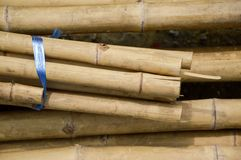Dry bamboo pole Stock Photo