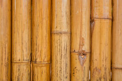 Dry Bamboo pole pattern Stock Photography
