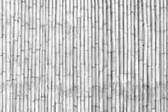 Dry bamboo stalk wall Stock Image