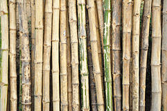 Dry bamboo stalks Royalty Free Stock Photography