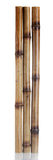 Dry bamboo sticks Stock Image