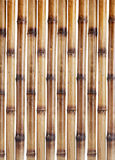 Dry bamboo sticks Stock Images